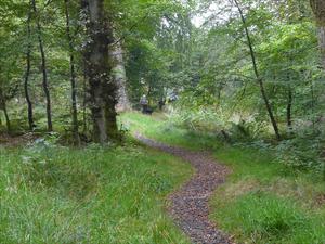 04 kielder woodland