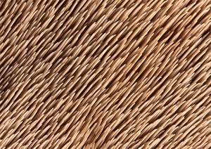 Scacodon squamosus Cragside