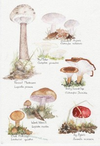Woodland fungi wm copy