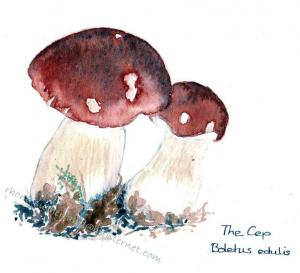 The-Cep