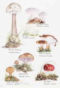 Woodland-fungi
