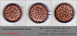 Diderma spumarioides spores108.pixi