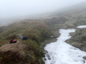 Cheviot snowbed