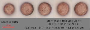 spore in water149.pixi