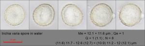 trichia varia spore in water150.pixi
